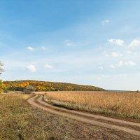 дорога в осень :: Андрей ЕВСЕЕВ