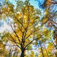 осень в лесу :: Kylie Row