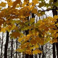Осенние листья. :: Фотогруппа Весна.
