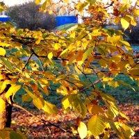 Осенние листья-3. :: Фотогруппа Весна.