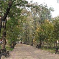 В осеннем парке... :: Ольга Башарова