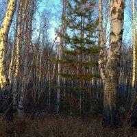 вечер в лесу :: Виталий Городниченко