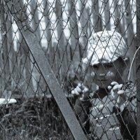 Детка в клетке :: Лилия Лисова*