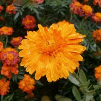 Солнечный цветок. :: Валентина Жукова