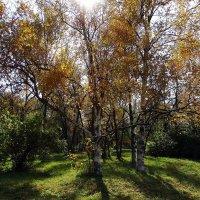 Осенний парк :: Владимир Бровко