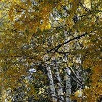 Осень :: Владимир Бровко