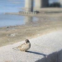 Птичка на бордюре . :: Мила Бовкун