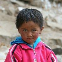 Городской тибетец. :: Аркадий Шведов