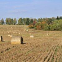 Осенний сбор урожая :: Андрей Куприянов