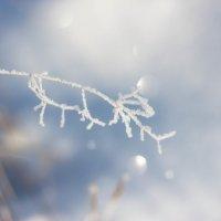 ...дыхание мороза... :: Галина Каплинская