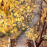 Осенняя пора :: Риф Сыртланов