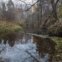 Осень в лесу :: Евгений Мельников