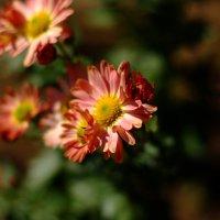 Цветочки :: владимир Баранов