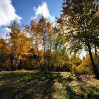Солнечная осень :: Виктор Берёзкин