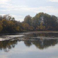 Лесное озеро :: Сергей Лошкарёв