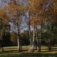 Осень в Ботаническом саду Фото №1 :: Владимир Бровко