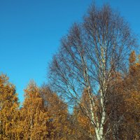 Северодвинск. Осень (3) :: Владимир Шибинский