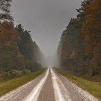 Осенний лес, дорога :: Александр Творогов