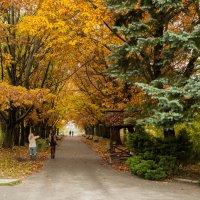 Осень на дубовой аллее.. :: Андрей Нибылица