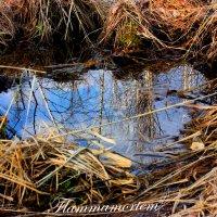 Отражение в воде :: Flammamortem .