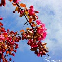 Весна :: Flammamortem .