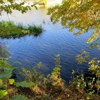 Заводь на реке Рось в парке имения княгини Лопухиной :: Сергей Георгиевич Мещеряков