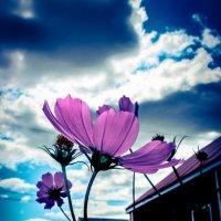 ***Смотрящие в небо... :: Allekos Rostov-on-Don
