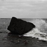 Берег Финского залива :: Полина