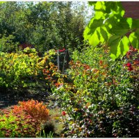 Осень на даче... :: Тамара (st.tamara)