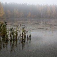 Осенние камыши... :: Sergey Apinis