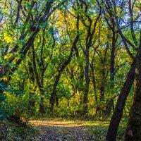 Осень в лесу :: Николай Николенко