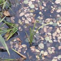 вода и листья :: Marina