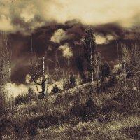 Старое дерево :: Андрей Качин