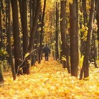 Осень,осень,лес остыл и листья сбросил... :: Инна Пивоварова