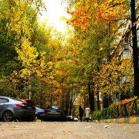 золотая осень :: Никита Ельцов