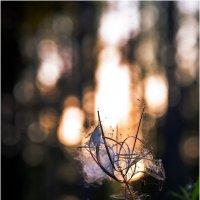 Про Солнышко, которое запуталось в траве с паутиной... :: Борис Борисенко