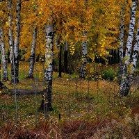И снова осень. :: Leonid Volodko