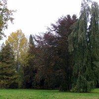 Осенние краски :: laana laadas