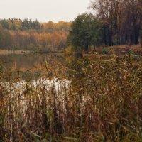 У осеннего озера :: sorovey Sol