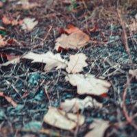 Листья дуба :: Света Кондрашова