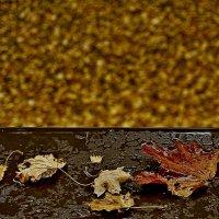 Мокрая осень на подоконнике. :: Lidija Abeltinja