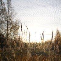 Осень :: Леонид Веденин