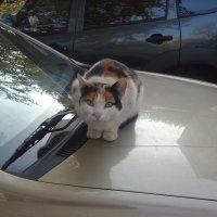 Кошка :: Анастасия Вышемирская