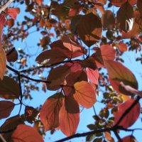 Осенние краски :: Арина