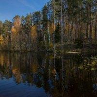 Лесное озеро :: Дмитрий Гортинский