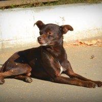 Преданный пёс :: Juliya Fokina