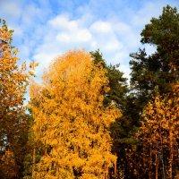 Золотая осень :: Владимир