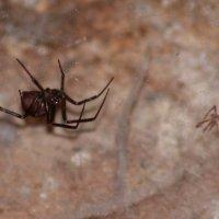 Октябрьский паук :: Aнна Зарубина