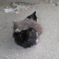 кот и я дружная сеья :: ARM-PHO
