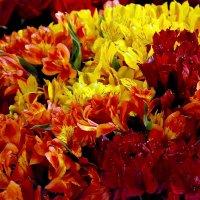 Цветы :: Елена Чижова